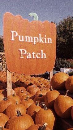 Halloween Season, Fall Halloween, Halloween Movies, Cute Fall Wallpaper, Halloween Wallpaper, Fall Background, Autumn Aesthetic, Fall Pictures, Fall Pics