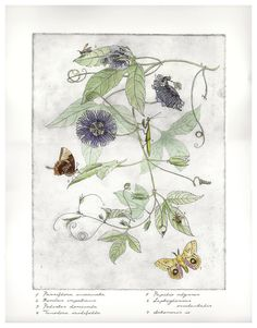 Print of Handcolored Passion Flower Etching by Sandra Mehl on Etsy. I would love to have this double-matted and framed in the den of my dream house...or better yet, in my office where I could see it every day.