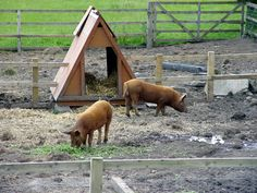 Pig ark. I like that you can use one side or the other for semi-rotational grazing.
