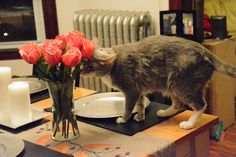 What flowers are safe for cats? - A Cat Called Bailey