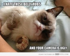 I hate these belly rubs. grumpy cat