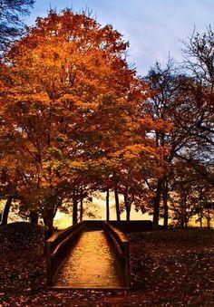 Fall in Franklin, TN