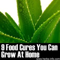 9 Food Cures You Can Grow At Home - Herbs Info