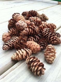 100 natural mini pine cones on Etsy