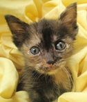 After being found half dead in the road, Autumn Rose has made a full recovery and thanks to ER4PETS, she is playing like a normal kitten should!