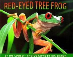 1999 Winner- Red-Eyed Tree Frog (EL ESL Reading Hampton 2004  Gr.5 Box A v.3)