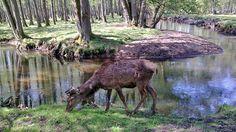 Waldtieren auf der Spur im Wildpark Eekholt | NDR.de - Ratgeber ...