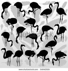 stock vector : Flamingo bird silhouettes and feathers illustration collection background vector