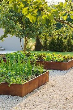 Boxed garden beds with pea gravel paths