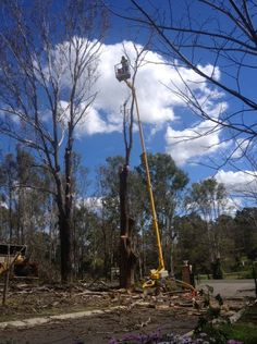 Whether you want large tree trimming or just want some young trees pruned, we have the expertise to tackle the job expertly and efficiently. The qualified and experienced arborists on our team can tackle all types of residential and commercial tree pruning service Cobbitty and our affordable tree trimming services are customised to your needs.