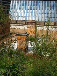 Urban Beekeeping For Beginners