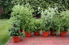 Why Grow Vegetables and Herbs in Pots?