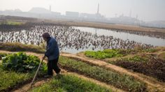 Pollution Rising, Chinese Fear for Soil and Food