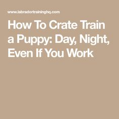 How To Crate Train a Puppy: Day, Night, Even If You Work