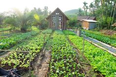 Khám phá ngôi nhà nhỏ giữa vườn rau hot nhất hiện nay! - Kul News Bahay Kubo, Forest Cottage, Future Farms, Agriculture Farming, Farm Stay, Timber House, Tiny House Living, Farm Gardens, Organic Farming