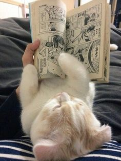 Cute Kittens Girl Names such Cute Animals For Pets or Cute British Shorthair Kittens For Sale -- Cute Baby Animals Coloring Pages Animals And Pets, Baby Animals, Funny Animals, Cute Animals, Animal Memes, Kittens Cutest, Cats And Kittens, Cute Creatures, Pretty Cats