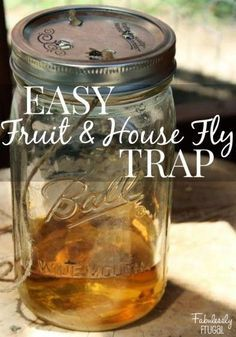 DIY Fly Trap:  1/2 sugar;1/4 cup apple cider vinegar or white vinegar;1/2 cup water; Few drops of dish soap; a jar
