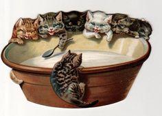 Victorian cats having milk