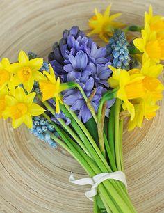 Narciso y jacinto : ¿Por qué no probar una combinación bicolor? El narciso amarillo habla de respeto y entendimiento entre la pareja, mientras que el jacinto azul representa la alegría del corazón de quien lo lleva.