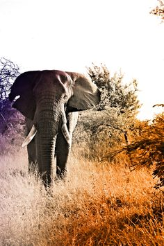 """Excited to visit Kruger National Park where we will see the """"big five"""": elephant, lion, leopard, rhino, and buffalo."""