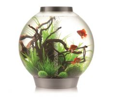 View our Blog to see how to use biOrb plants and how you can decorate your aquarium using them.