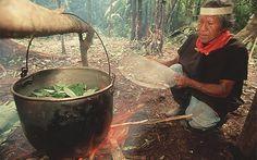 Egy indián drog újraépíti az agyat | A világ titkai