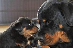 I love you, Mama ♥♥