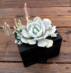 Small / reBEAM Planter with Succulent Arrangement by buschdesign, $30.00