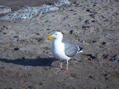 Jonathan Livingston Seagull  :)