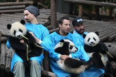Kevin, Howie, and AJ - Members of the Backstreet Boys hold giant pandas at the Giant Panda Breeding Research Institute during their China Tour on May 30, 2013 in Chengdu, Sichuan Province of China. (Photo by ChinaFotoPress/ChinaFotoPress via Getty Images)
