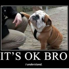 Funny Quotes about Animals