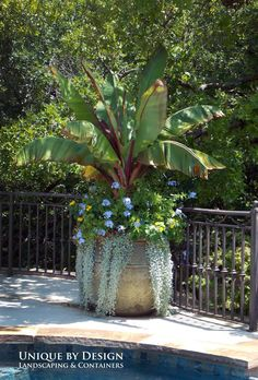 Discover this container gardening pin 5401829474 to consider now. Outdoor Flowers, Outdoor Planters, Garden Planters, Outdoor Gardens, Tropical Landscaping, Tropical Garden, Backyard Landscaping, Landscaping Ideas, Container Flowers