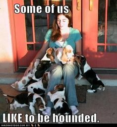 so many basset hound puppies   ...........click here to find out more     http://googydog.com