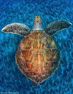 ~ Turtle Gem ~ By Jordi Chias