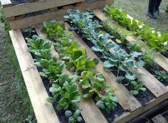 use a pallet to plant vegetables and herbs and minimize weeds!