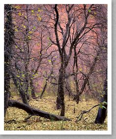 Trees, Kolob Canyon, Zion 1991