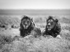 TWO KINGS by MaX M1ller