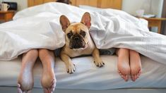 Having trouble sleeping? These insomnia-inducing habits could be to blame. Having trouble sleeping? These insomnia-inducing habits could be to blame. People Sleeping, Sleeping Dogs, Before Bed, Trouble Sleeping, Good Night Sleep, Dog Friends, Dog Bed, Your Pet, Humor