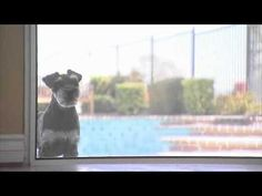 Cesar Millan on Curing Separation Anxiety