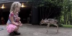 """""""The Deer Whisperer."""" (This is A Heart-Warming Video of Trust From A Young Wild Animal, And A Little Girl. Please Click-On The Photograph. Earn Money From Home, Way To Make Money, Websites Like Etsy, Most Asked Questions, Earn Extra Cash, Polymer Clay Sculptures, Play Soccer, Baby Deer, Little Girls"""