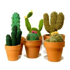 Cactus from Elementos Argentinos.  NO pattern, inspiration