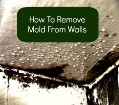 how to remove mold from walls housewife how to 39 s