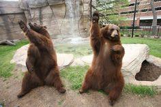 Go Baylor Bears!