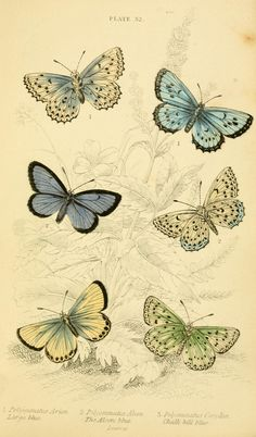 butterflies vintage