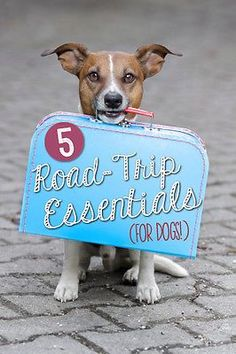 If you're planning a road-trip with your family - the furry four-legged members included - you might be nervous about how your dog will handle long hours in the car. As it turns out, with some careful planning and preparation, your travel can go off without any hitches! Follow along as eBay shares five road trip essentials for dogs that will ensure they are enjoying their vacation as much as the rest of the family!
