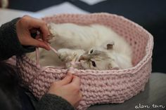 tutorial about crocheting a cat container (in finnish, no less)....I'm more interested in the helper cat & that hind foot.  I'm sure the project goes faster with help. click for project.