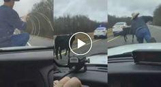 Vaqueiro Coloca-se Em Cima De Carro Policial e Usa Laço Para Apanhar Vaca à Solta Na Estrada