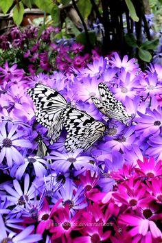 Paradise of Butterfly II by ~jinseinokaze
