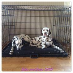 Punktesturm: Auf der Arbeit und Hund allein zu Hause