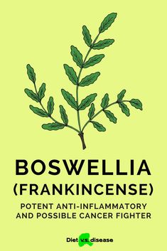 You may better know boswellia as frankincense, an herbal extract and essential oil.Boswellia has been used for centuries in incense, perfumes and traditional Asian, African and Middle Eastern medicine.It's now touted for its anti-inflammatory properties and potential ability to even fight cancer.This article digs into the science behind boswellia to see if it lives up to the hype. #dietitian #nutritionist #boswellia